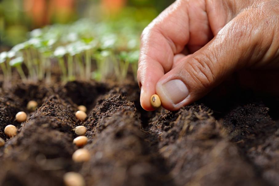Atelier - Préparation des semis à la Branche