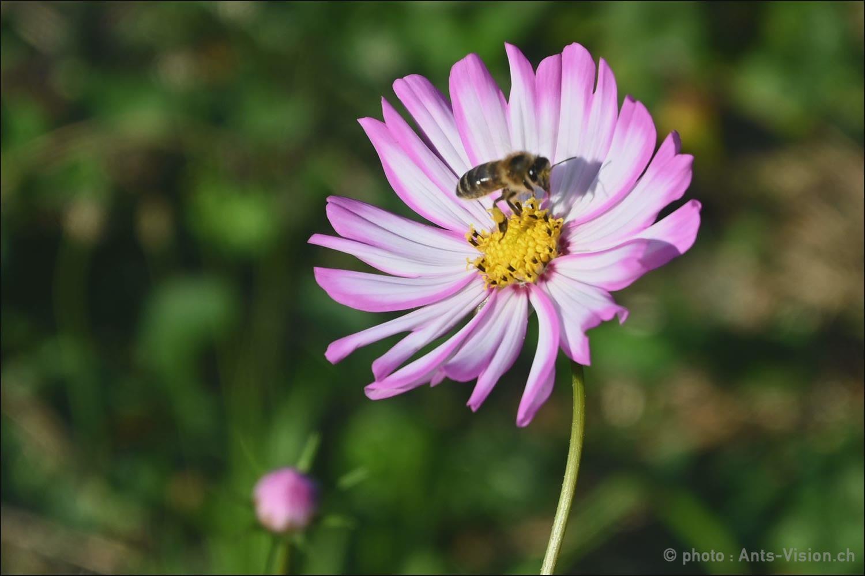 Suivi de la nouvelle ruche et Formation Waldlicht