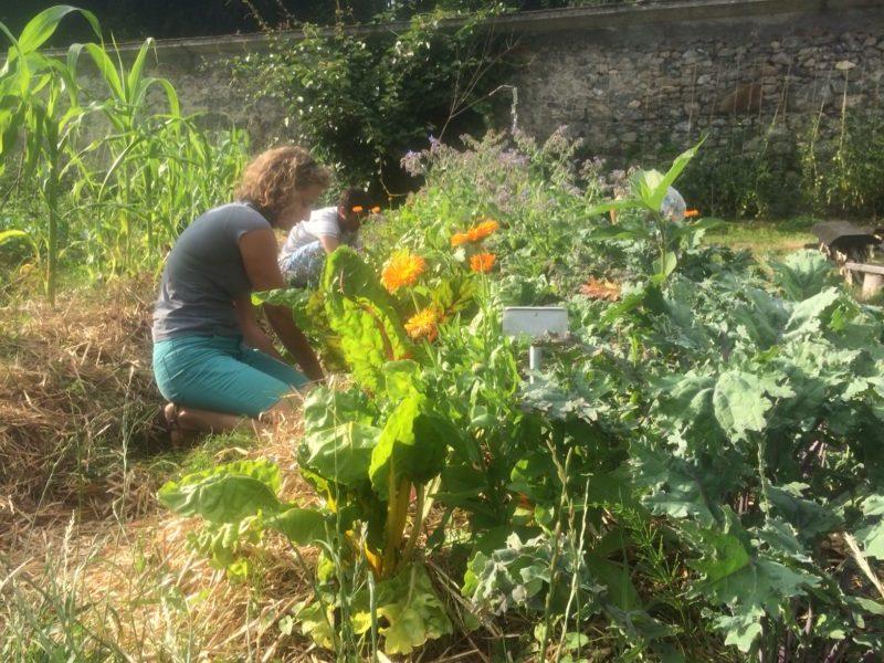 Atelier - Soigner son jardin simplement