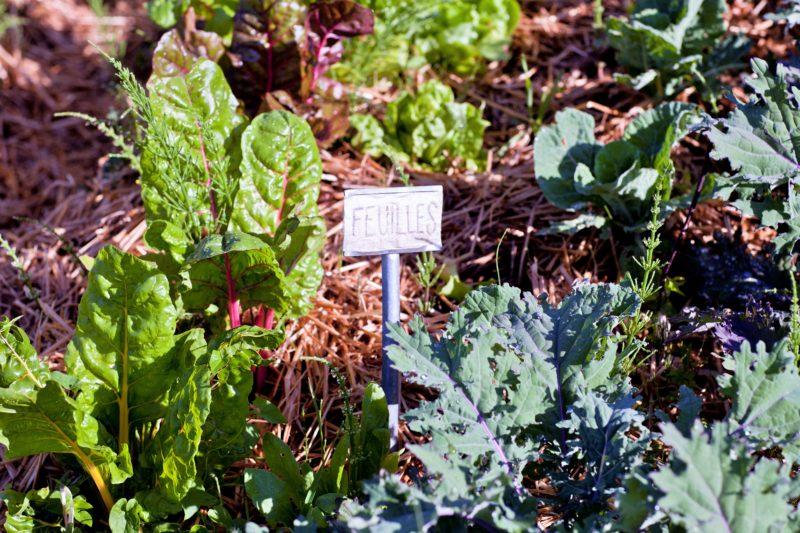 Introduction à la permaculture et 1er pas au potager