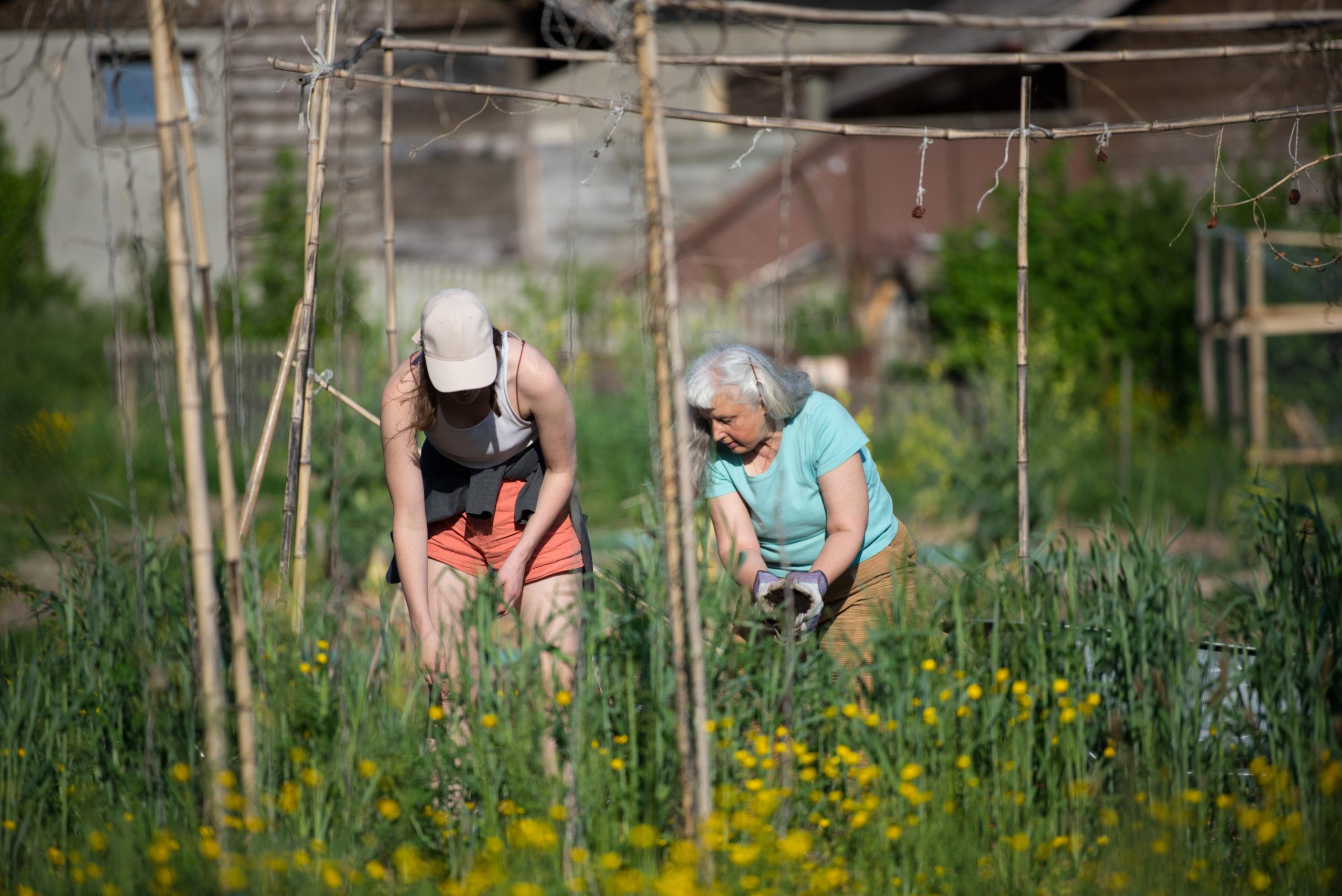 Démarrer un potager urbain - Entretenir son jardin