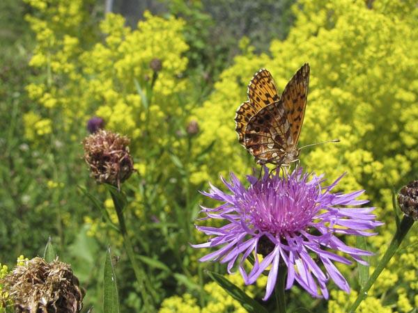 La biodiversité au jardin et construction d'un hôtel à insectes