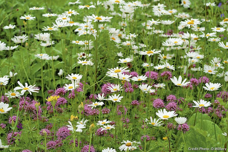 Groupe de travail sur les plantes bio-indicatrices